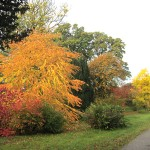 autumn colour 2
