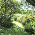 shrub lined walk